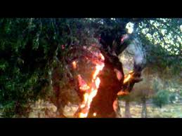 Photo of Mercenaries Groups Burn Olive Trees in Afrin