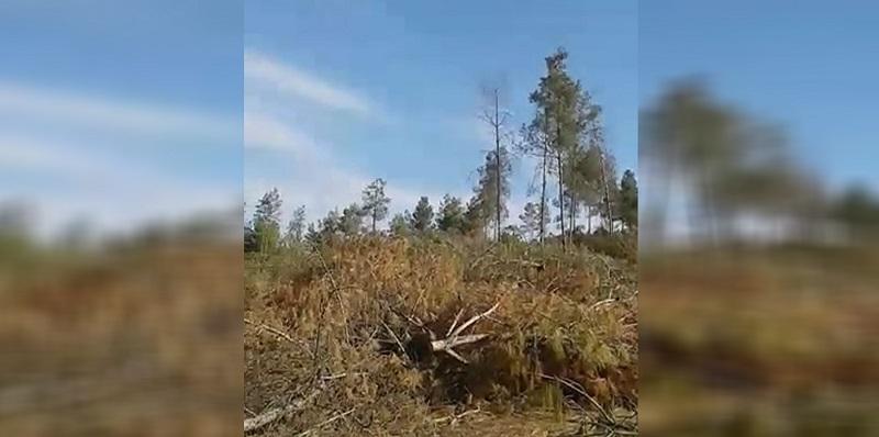 Photo of Çeteyên dewleta Tirk Darên Efrînê dibrin