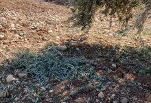 Photo of Li Efrînê dîsa dema talankirin û diziyê ye