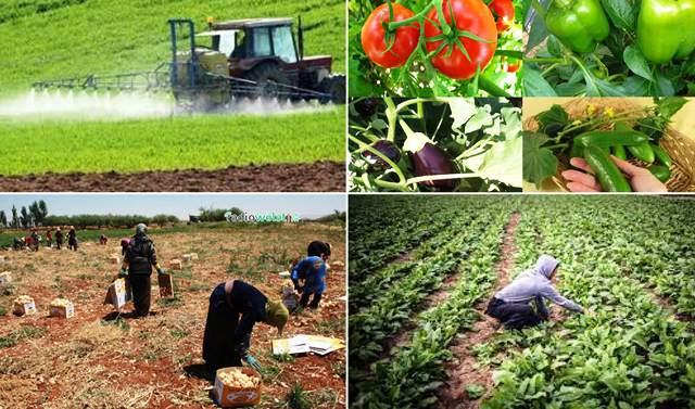 Photo of رصد الواقع الزراعي في الريف الجنوبي لمقاطعة الجزيرة