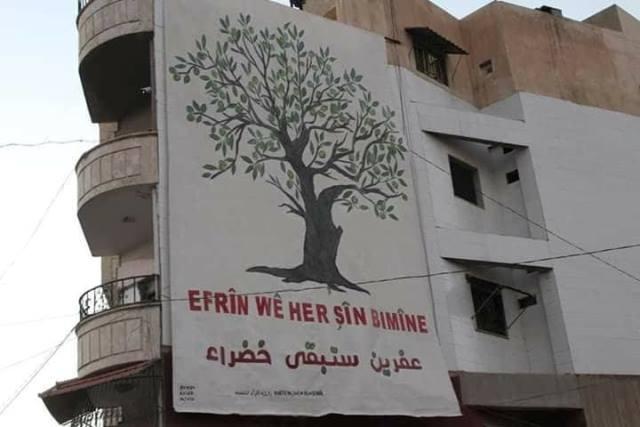 Photo of أكبر شجرة زيتون في قامشلو