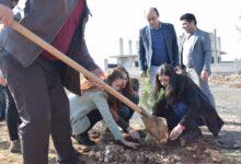 Photo of حزبنا يشارك في زراعة أشجار حراجية بذكرى تحرير كوباني